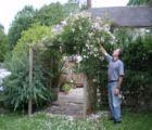 Pergola with climbing rose