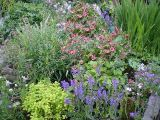 Copyright image: Perennial plants in a border