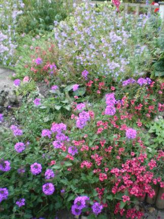 Copyright image:  Beautiful plant combinations.