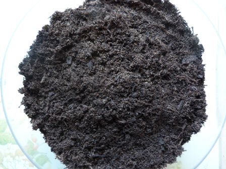 Copyright image: Mixed compost and sand for growing pea shoots.