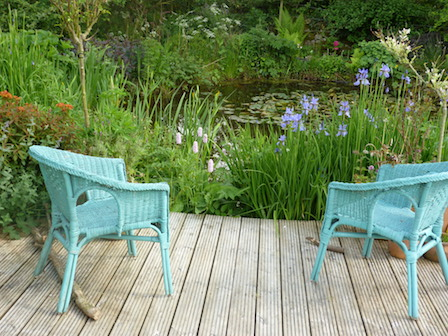 Copyright image: Natural pond with decking, blue iris and candelabra primulas.