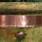 Copper tape used for slug damage.