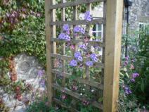 Copyright image: A pergola arch and trellis with lovely purple clematis and cottage garden flowers.