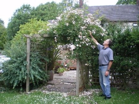Copyright image: Pergola climbing plants: a vigorous pale pink rambler rose growing over a pergola.