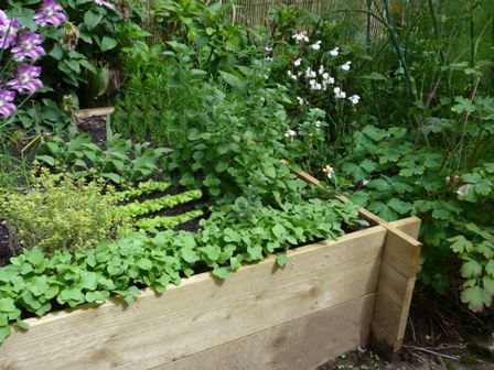 Copyright image: Raised bed with low growing and climbing vegetables in a vertical garden.